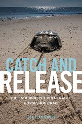 Catch and ReleaseThe Enduring Yet Vulnerable Horseshoe Crab